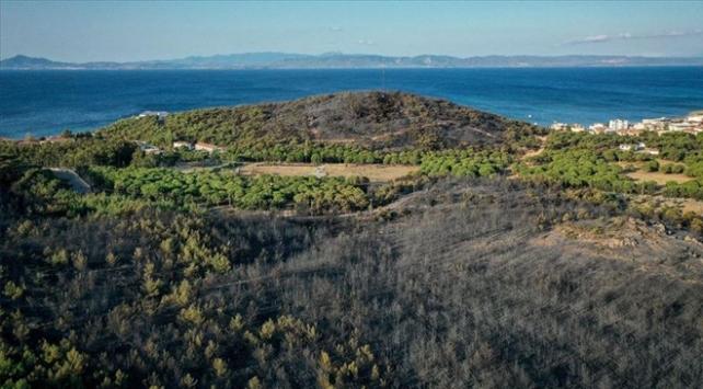 Balıkesirde yangında zarar gören bölge yeniden ağaçlandırılacak