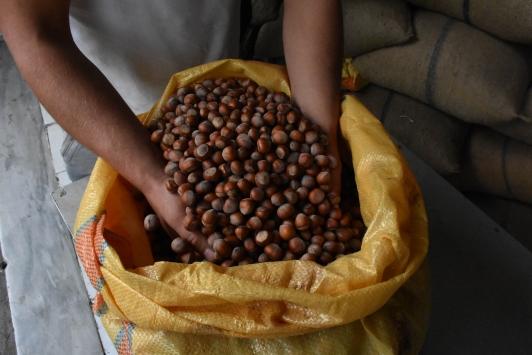 Fındık üreticileri, TMOnun ardından serbest piyasada artan fiyatlardan memnun