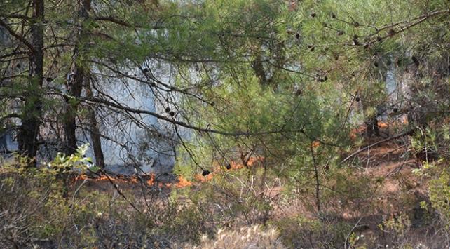 Eskişehirde otomobilde çıkan yangın ormana sıçradı