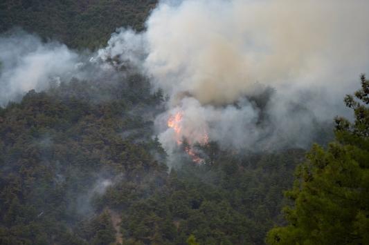 Eskişehirde otomobilde çıkan yangın ormanlık alana sıçradı