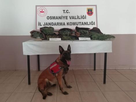 Osmaniyede evinde uyuşturucu imal eden şüpheli yakalandı