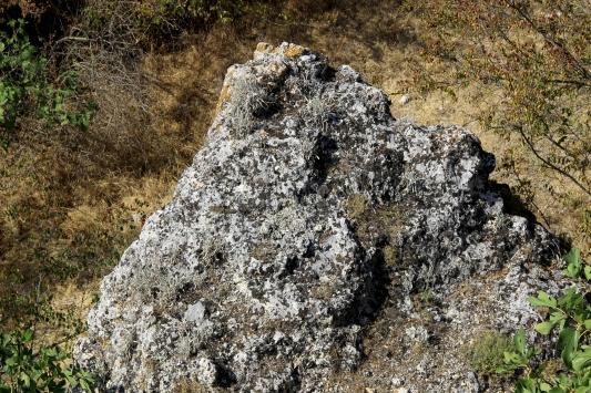 Edirnede Traklara ait tarihi kaya sunağında güneş diski bulundu