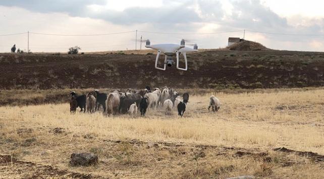 Elazığda kaybolan 43 küçükbaş hayvan drone ile bulundu