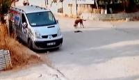 Minibüsün ezdiği kedinin başından ayrılmayan köpek kamerada