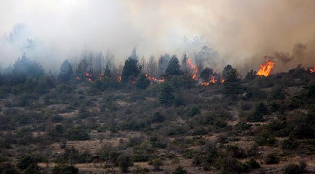 Boluda ormanlık alanda yangın