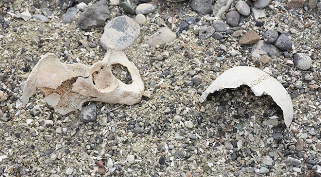 Arpaçay Barajında su seviyesi düştü, tarihi mezarlık ortaya çıktı