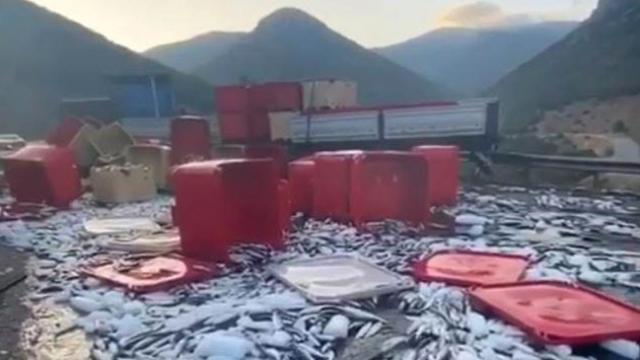 Dorse kapağı açılan tırdaki tonlarca balık yola saçıldı