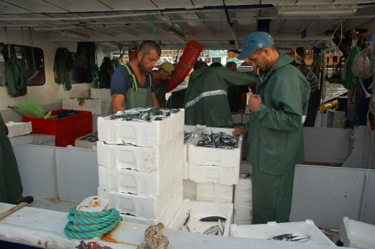 Didimde balıkçılar iskeleye tekneleri dolu döndü