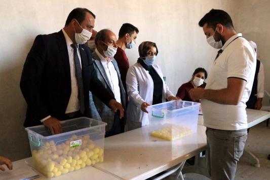 Elazığda 500 koç devlet desteğiyle üreticilere dağıtıldı