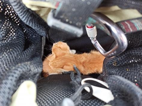 Bursada baca boşluğuna sıkışan 2 yavru kedi kurtarıldı