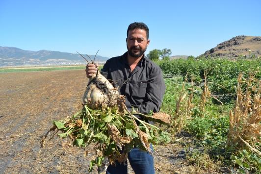 Gaziantepte 14 bin dönüm alanda şeker pancarı hasadı sürüyor