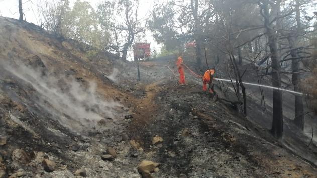 Kahramanmaraştaki orman yangınında bir hektarlık alan zarar gördü