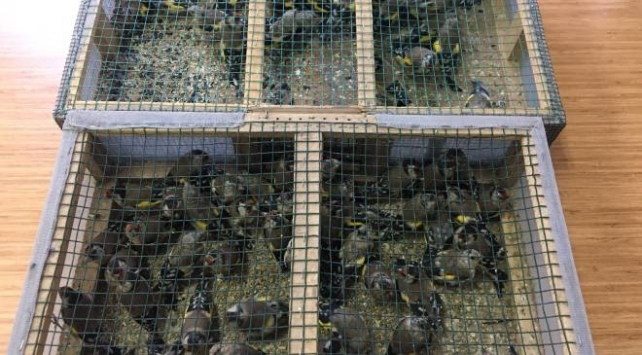 Saka kuşu avlayan baba ve oğluna 91 bin 350 lira ceza