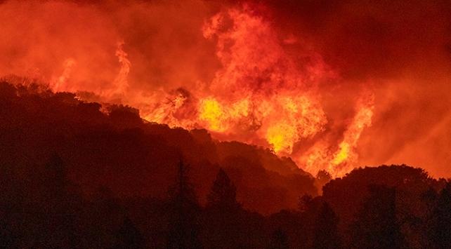 Californiadaki orman yangınlarında rekor düzeyde alan yandı