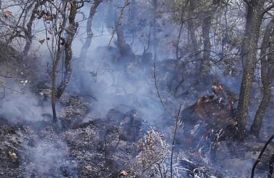 Beypazarı ilçesinde çıkan orman yangını kontrol altına alındı