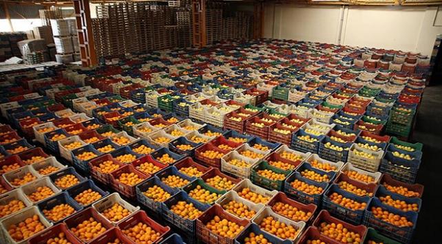 Yaş meyve ve sebze ihracatından 1 milyar 690 milyon dolar gelir sağlandı