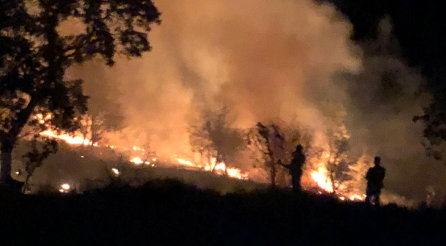 Aydında dün çıkan orman yangını kontrol altına alındı