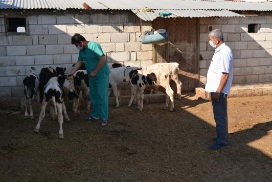 """Gaziantepte büyükbaş hayvanlarda """"üç gün hastalığı"""" görülmesi üzerine uyarı yapıldı"""