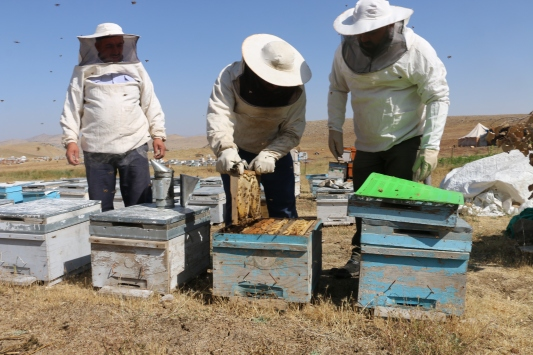 Herekol Dağı eteklerinde huzur ortamında bal üretimi yapılıyor