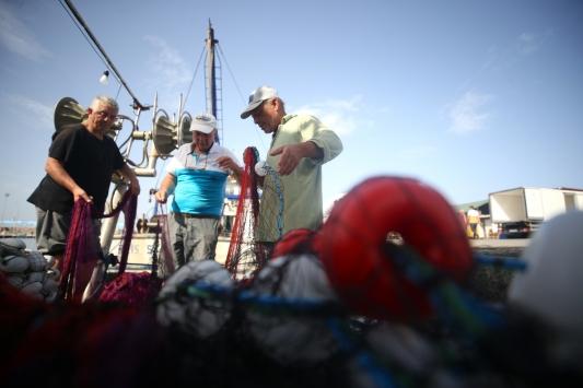Palamut bolluğu balıkçıların yüzünü güldürüyor