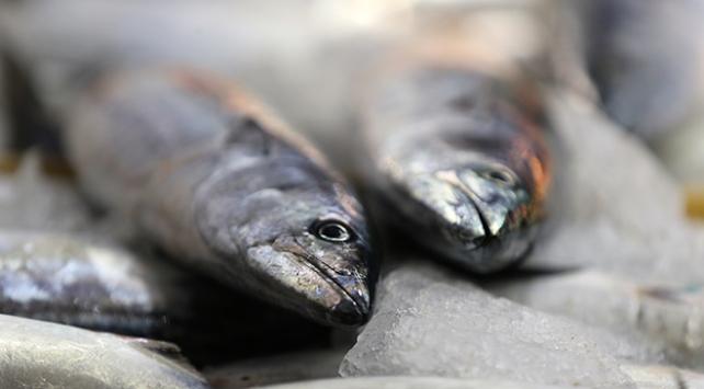 Balık tezgahlarında palamut bereketi sürüyor