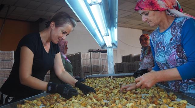 Kuru incir ihracatında hedef 60 bin ton