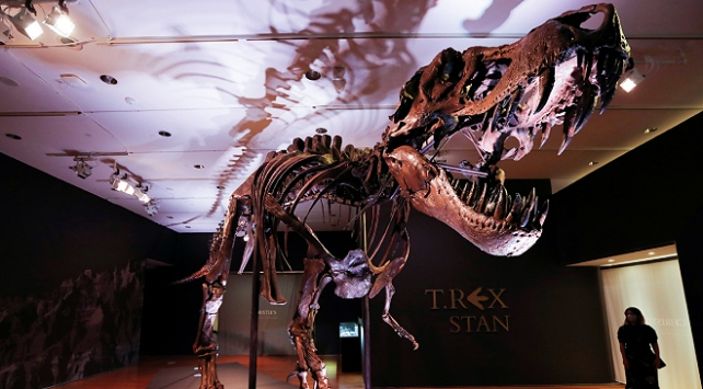 New Yorkta 67 milyon yıllık dinozor iskeleti 27,5 milyon dolara satıldı