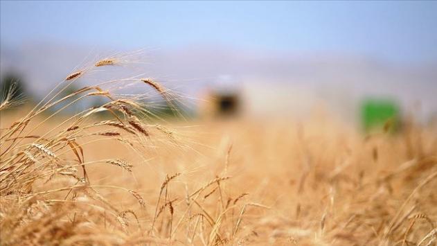 Terör örgütü PKK/YPG ve Esed rejiminin buğday kavgası sürüyor