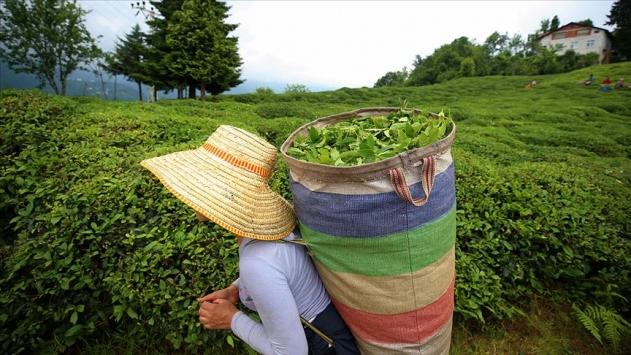 9 ayda ihraç edilen çayın 4te 1ini Belçika aldı
