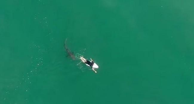 Köpek balığı ile burun buruna sörf
