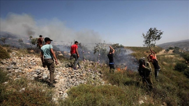 Fanatik Yahudi yerleşimci Batı Şeriada Filistinlilere ait zeytin ağaçlarını ateşe verdi