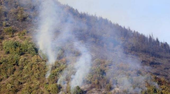 Trabzonda ormanlık alanda yangın