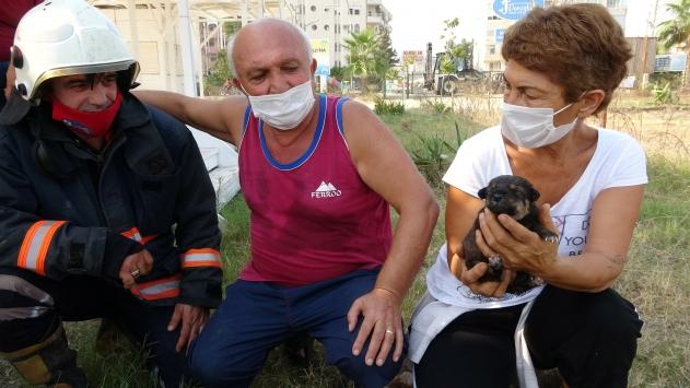 Kayalıklarla mahsur kalan köpek yavrusu kepçe yardımıyla kurtarıldı