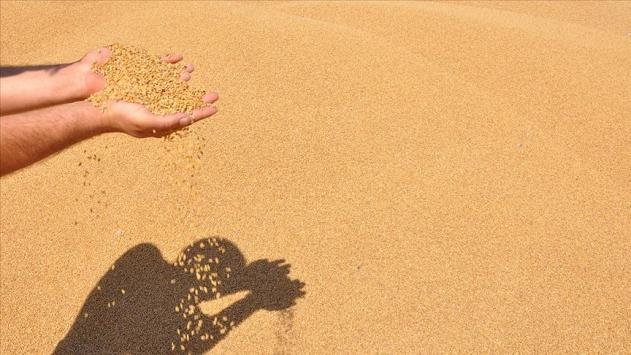 Güneydoğu hububat ve bakliyat ihracatını yüzde 12 artırdı