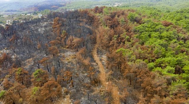 Yanan ormanlık alanlar yeniden yeşillendirilmek için hazırlanıyor