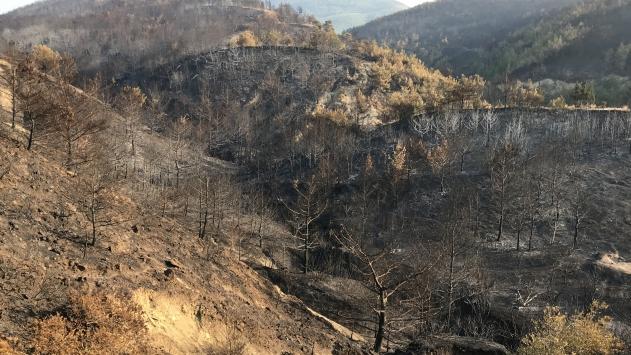 Hataydaki orman yangınında soğutma çalışmaları tamamlandı