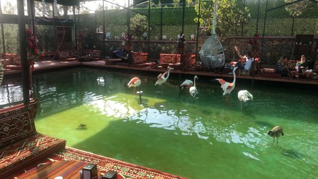 Doğa koruma ekipleri, Tuzlada 6 flamingo ve 1 vervet maymununa el koydu