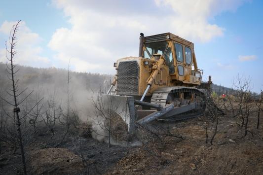 Hatayda yanan alanlar fidan dikimine hazırlanıyor