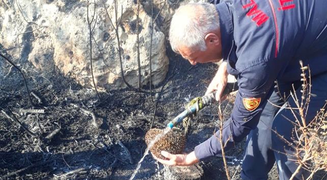 Yangından etkilenen kirpiyi itfaiye eri kurtardı