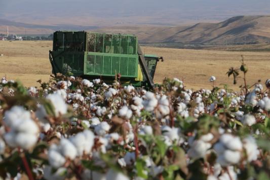 Güneydoğuda pamuk verimi ve fiyatıyla üreticiyi sevindirdi