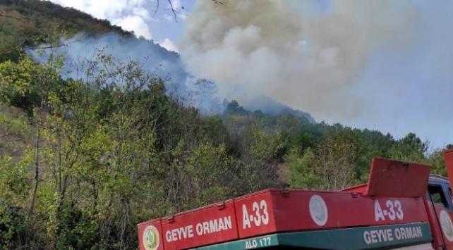 Sakaryada orman yangını