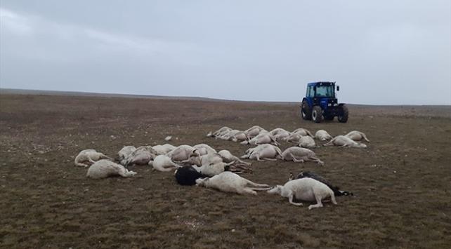 Afyonkarahisarda yıldırım düşmesi sonucu 34 koyun telef oldu