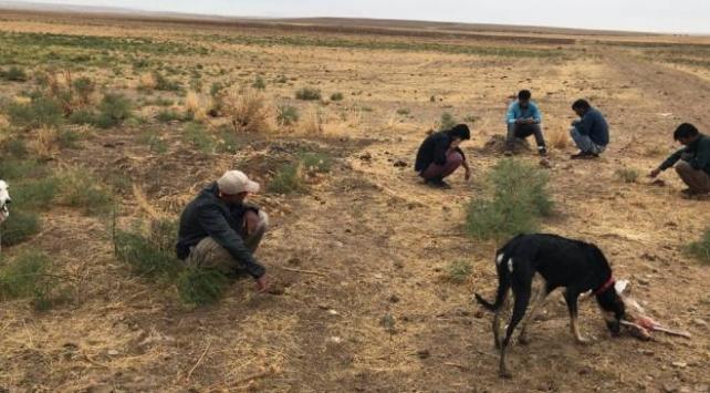 Köpeklerle tavşan avlayan 5 kişiye 14 bin lira ceza kesildi