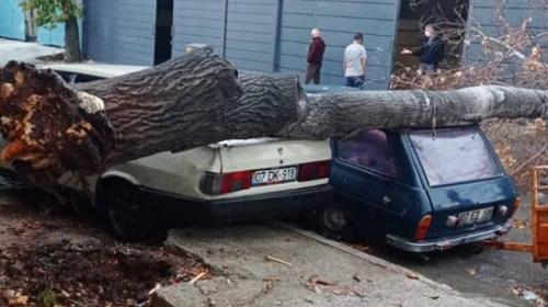 Antalya'da sağanak ve rüzgar: Ağaçlar devrildi, yollar göle döndü