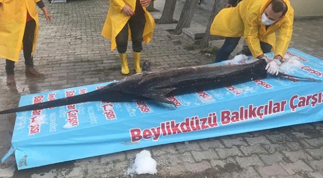 Marmara Denizinde 3 metrelik kılıç balığı yakalandı