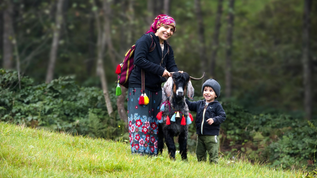 Doğu Karadeniz Bölgesi`nde, asırlardır gelenek olarak yaşatılan yaylacılık, mayıs ayı ortalarında başlayıp, sonbaharla birlikte sona eriyor.