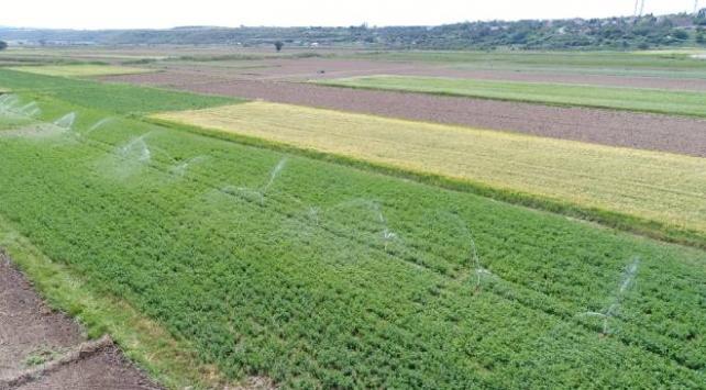 Çanakkalede bu yıl 243 bin 77 dekar arazi sulandı