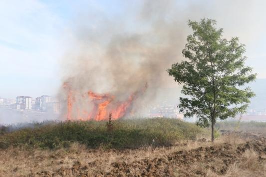 Samsunda ağaçlık alanda çıkan yangın ekiplerin müdahalesiyle söndürüldü