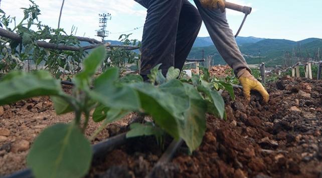 Tarım arazilerini hobi bahçesi için satanlara hapis cezası
