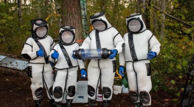 ABDde katil arı operasyonu